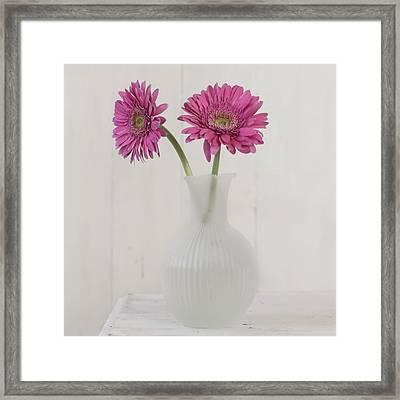 Framed Print featuring the photograph Gerbera Daisy Love by Kim Hojnacki