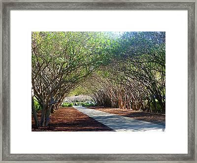 Dallas 1 Of 5 Framed Print by Tina M Wenger