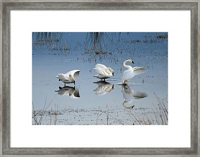 Dance Of The Trumpeter #1a Framed Print