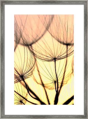 Dandelions Framed Print by Iris Greenwell