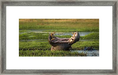 Dare To Yawn Framed Print by Renee Doyle