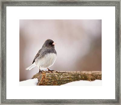 Dark-eyed Junco Framed Print
