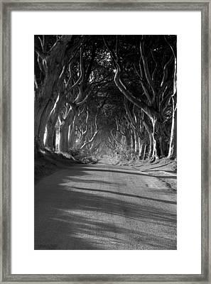 'dark Hedges' Framed Print by Mark Hinds