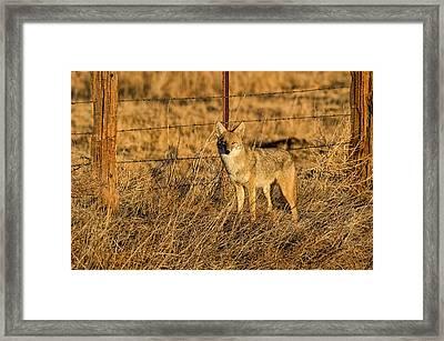Dawn Raider Framed Print