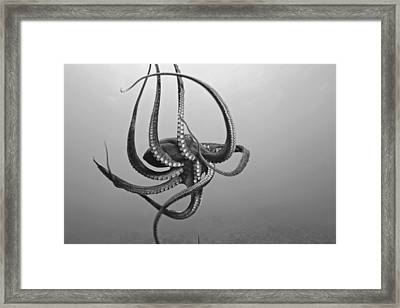 Day Octopus Framed Print