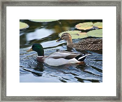 Day On The Pond Framed Print by Alex Garcia