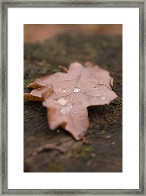 Dead Leaf Framed Print by Mihail Antonio Andrei