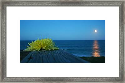 Decked Out Framed Print