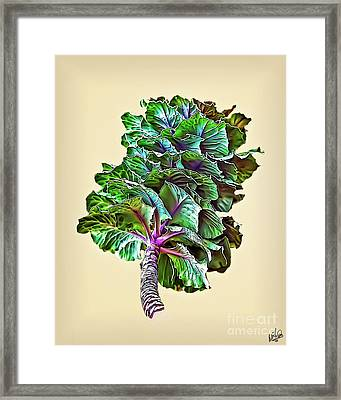Framed Print featuring the photograph Decorative Cabbage by Walt Foegelle