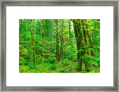 Deep In The Green Framed Print by Jeff Swan