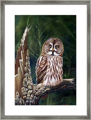 Deep In The Woods Framed Print by Frank Wilson