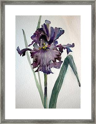 Deep Purple Framed Print by Mindy Newman