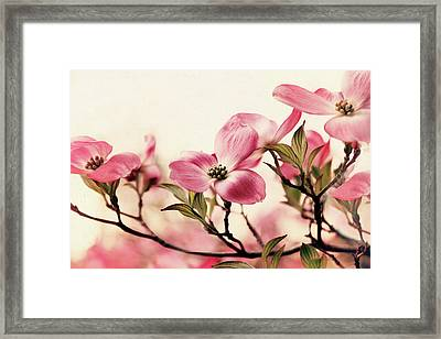 Framed Print featuring the photograph Delicate Dogwood by Jessica Jenney