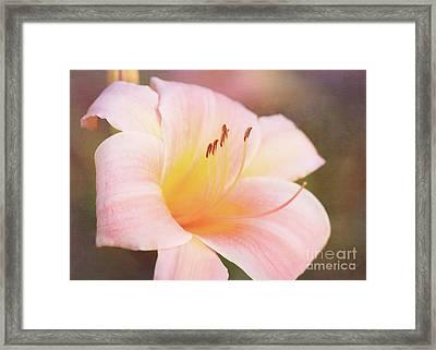 Delightful Daylily Framed Print