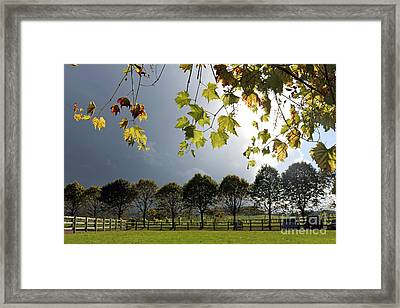 Denbies Vineyard Surrey Uk Framed Print