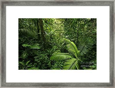 Dense Tropical Rain Forest Framed Print
