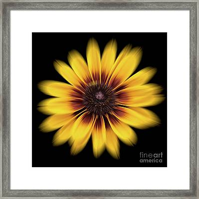 Framed Print featuring the photograph Denver Daisy by Ann Jacobson