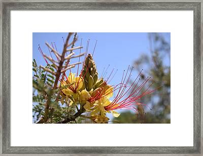 Desert Beauty Framed Print by John Glass