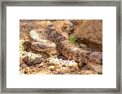 Desert Camouflage Framed Print