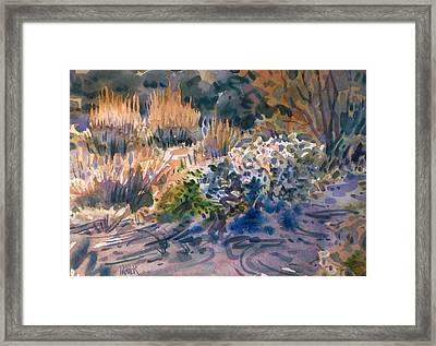 Desert Flora Framed Print by Donald Maier