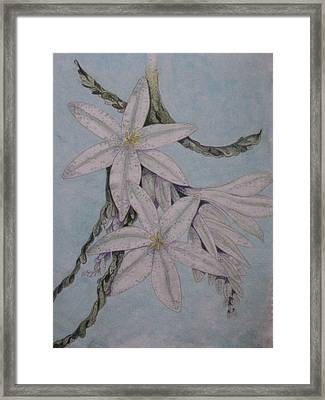 Desert Lillie Framed Print by David Kelly