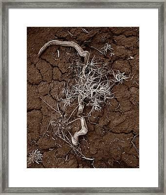 Desert Still Framed Print
