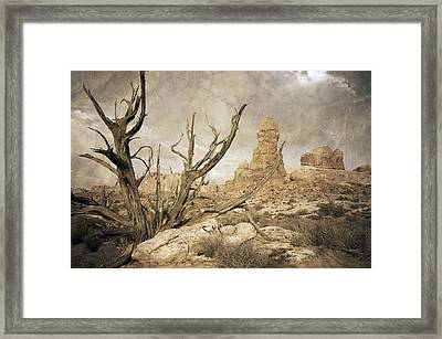 Desert Tree Framed Print by Mike Irwin