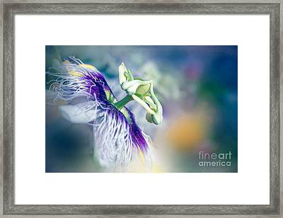 Destination Sunshine Framed Print by Sharon Mau