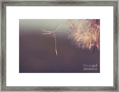 Framed Print featuring the photograph Detachement by Aimelle