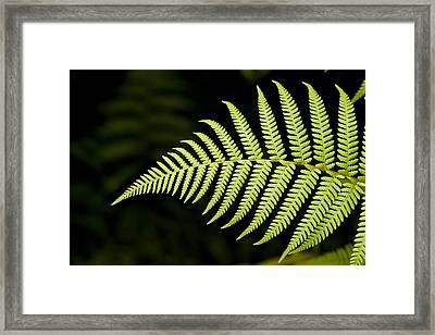 Detail Of Asian Rain Forest Ferns Framed Print