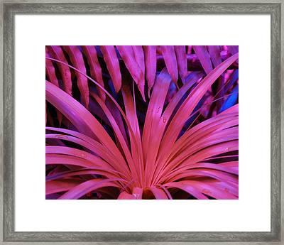 Dew Drop Pink Framed Print by Florene Welebny