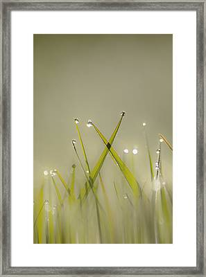 Dew On Grass Framed Print