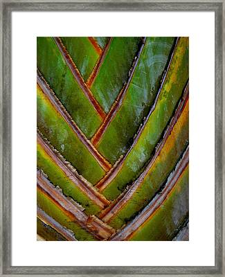 Diagonal Dance Framed Print by Donna McLarty