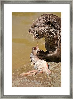 Dinner Time Framed Print by Scott Carruthers
