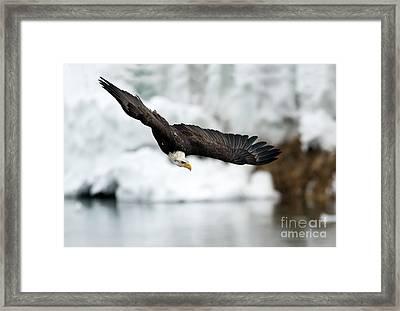 Dive Framed Print by Mike Dawson