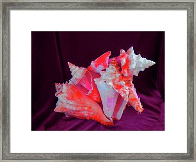 Dog Shell Framed Print by Arlin Jules