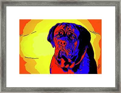 Dogue De Bordeaux Framed Print