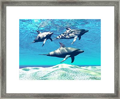Dolphins Framed Print by Corey Ford