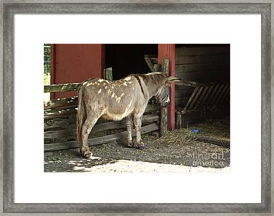 Donkey In Barn Framed Print