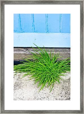 Door Step Framed Print by Tom Gowanlock