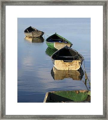 Dory Chain Framed Print by Carolyn Marcotte