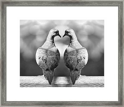 Dove Birds Framed Print