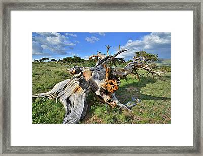 Down And Out Framed Print by Ray Mathis