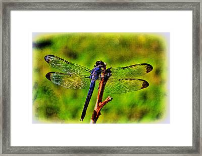 Dragonfly Blues Framed Print by Olahs Photography