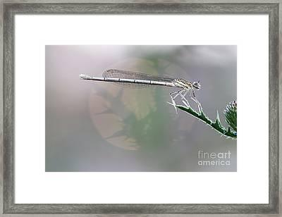 Dragonfly On Leaf Framed Print by Michal Boubin