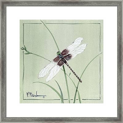 Dragonfly Framed Print by Paul Brent