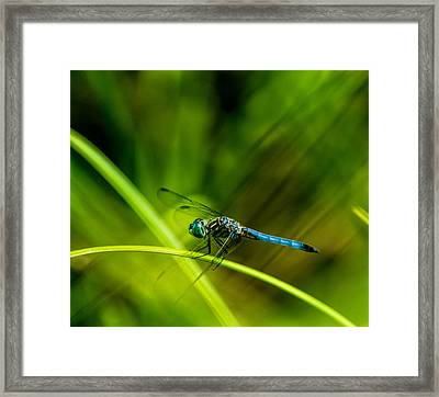 Dragonfly With A Strong Tailwind Framed Print by Douglas Barnett