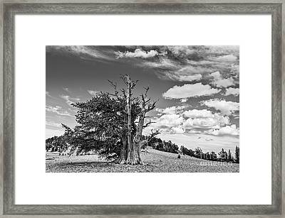 Dramatic View Of The Ancient Bristlecone Pine Forest. Framed Print by Jamie Pham