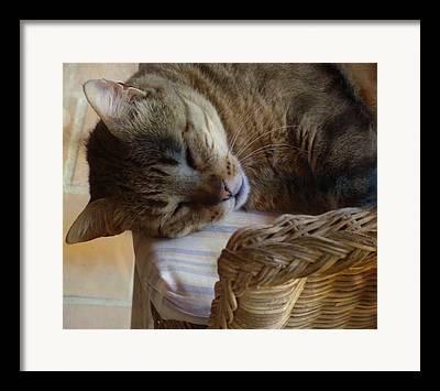 Sleeping Cat Photographs Framed Prints