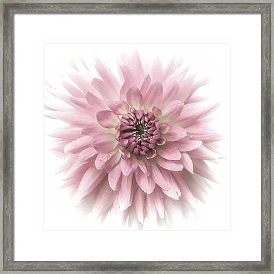 Framed Print featuring the photograph Dreamy Dahlia by Julie Palencia